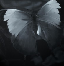 Liu Xiaofeng – Butterfly 2 by