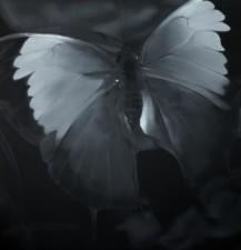 Liu Xiaofeng - Butterfly 2